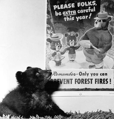 smokey bear and piper aircraft june 12 2015 robert novell